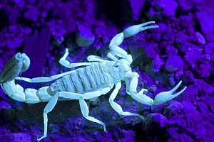 How to get rid of scorpions from your home and yard.