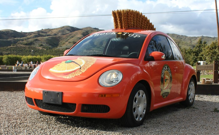 shock top bug