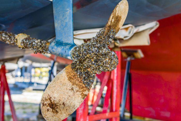 invasive species transported on propeller to montana