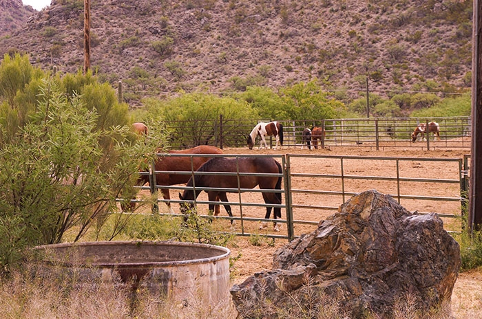 colossal cave mountain park horseback riding