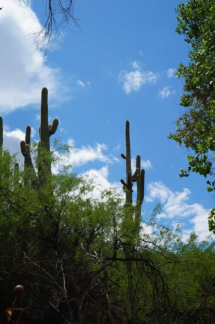 colossal cave mountain park nature