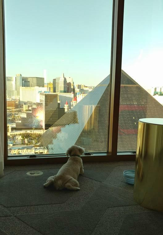 Dog Friendly Hotel Suite at Delano Las Vegas