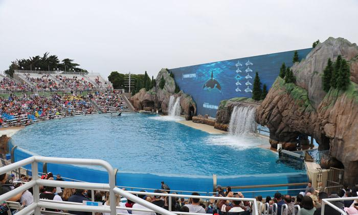 orca encounter seaworld san diego infinity screen