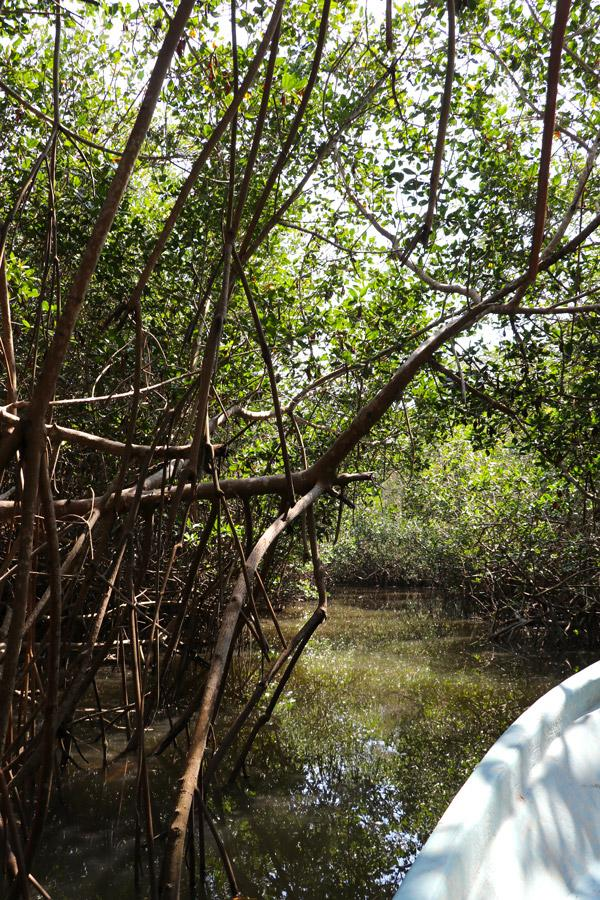 estero de el salado puerto vallarta jungle cruise through mangrove swamps