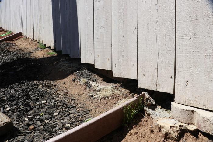 gaps in fence allow rattlesnakes to pass through