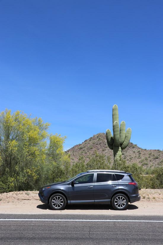 rav4 catcus arizona