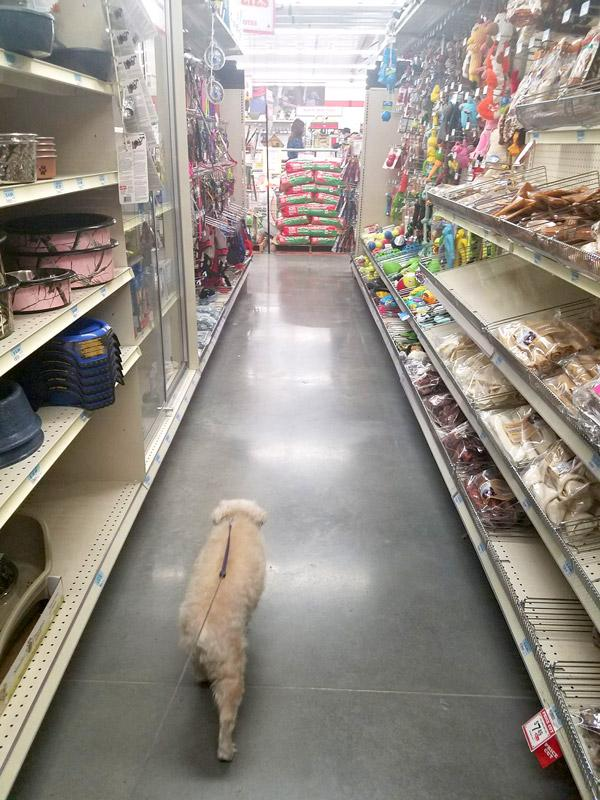 niki walking down treats toys