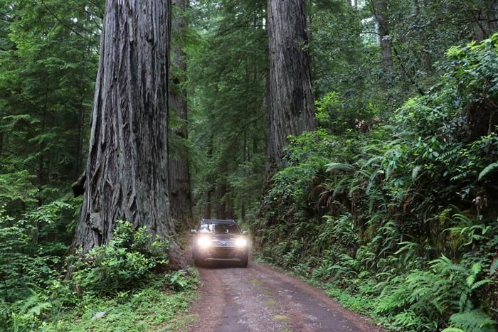 driving through redwood national park california