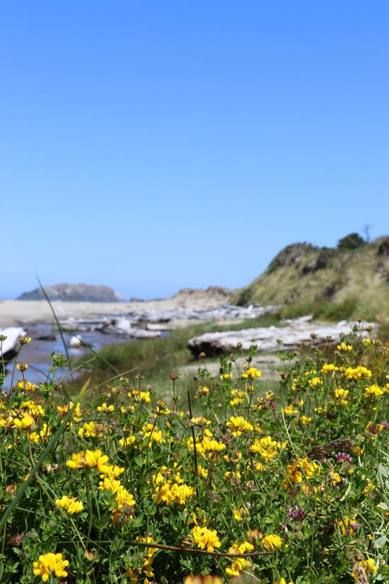 flowers on beach bandon oregon
