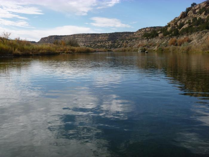 san juan river trout fishing