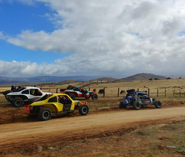 wide open baja cars by cows