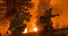 Wildfire Forest Fire Fighters