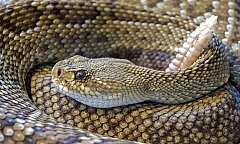 How to Rattlesnake Proof Your Yard