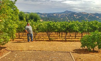 James looking confident in Sonoma vineyard